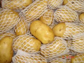 China′s High Quality Fresh Potato