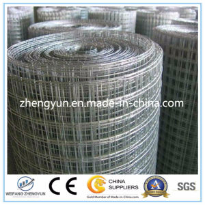 Galvanized Welded Wire Mesh From Chinese Supplier pictures & photos