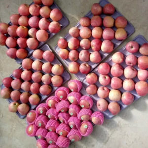 Top Quality of Fresh Red Qinguan Apple pictures & photos