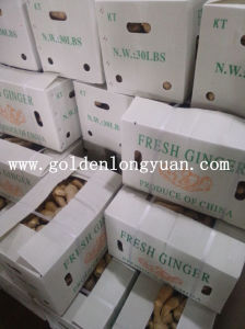Whole Air Dry Ginger From Local Factory pictures & photos