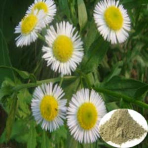 Feverfew Extract/Parthenlide pictures & photos