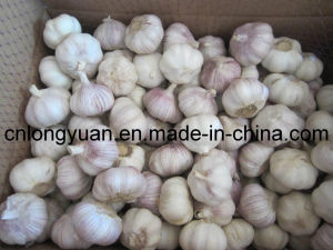 5.5cm Purple White Garlic with Carton Packing pictures & photos