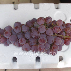 Chinese Supplier of Fresh Sweet Global Grape pictures & photos
