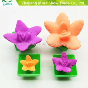Hot Fashion Growing Toys for Chindren Mini Ponsai Funny Growing Cactus Can Grow pictures & photos