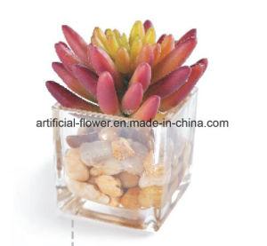 Artificial Bonsai, Artificial Cactus pictures & photos