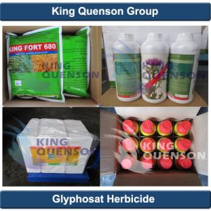 King Quenson Herbicide High Effective Supplier 95% Tc Glyphosate 80% Sp pictures & photos