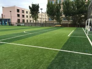 Wholesale Football Soccer Artificial Turf Grass pictures & photos