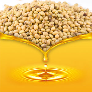 Non-Transgenic Soybean Oil for Cooking