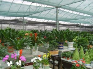 Top Selling Products HDPE Shade Netting to Protect The Fruits and Vegetables pictures & photos