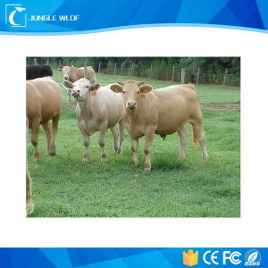 Em4305 Lf RFID Ear Tag Animal Tags for Animal Tracking Management pictures & photos