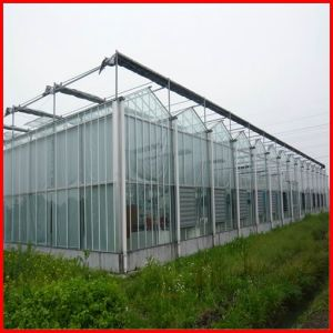 Agriculture Multi-Span Venlo Polycarbonate Sheet Greenhouse for Sale pictures & photos