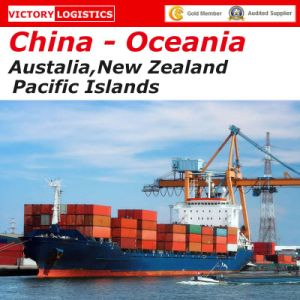 Shipping Container/Freight Forwarder/Ocean Shipping From China to Oceania