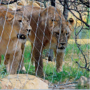 Lion Enclosure Mesh/Stainless Steel Wire Rope Mesh/Netting pictures & photos