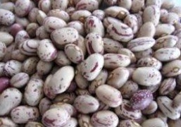 New Crop High Quality Light Speckled Kidney Beans pictures & photos