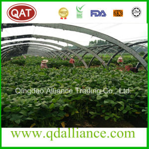 IQF Frozen Green Soybean in Shell pictures & photos