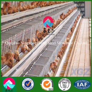 Two-Storey Chicken House in Angola (XGZ-A032) pictures & photos