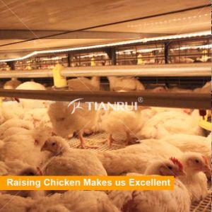 High area per chicken battery cage for broiler shed design pictures & photos