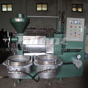 Myanmar Hot Selling Automatic Edible Oil Presser