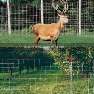 Deer & Wildlife Fence pictures & photos