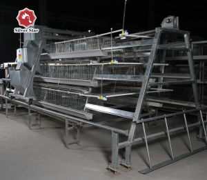 Silver Star Chicken Layer Poultry Battery Chicken Cage pictures & photos