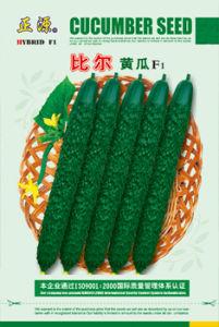 Asim Riaz Cucumber Seeds (125)