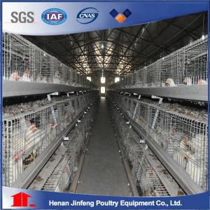 Farm Equipment for Poultry Chicken Farm Broiler Chicken Cage for Sale in Nigeria pictures & photos