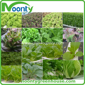 Farm Hydroponics System for Multi-Span Agricultural Greenhouse Type and Large Size High Quality Dutch Bato Bucket pictures & photos