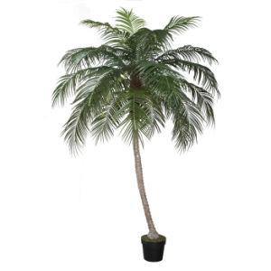 Artificial Phoenix Palm Tree with Plastic Pot pictures & photos