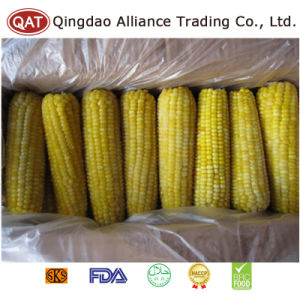 Top Quality Frozen Whole Sweet Corn COB pictures & photos