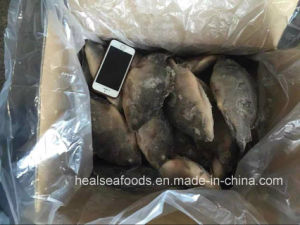 Chinese Frozen Black Tilapia Price (500-800g) pictures & photos