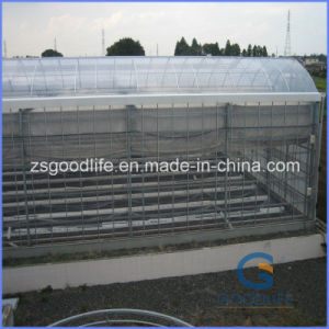 Colored Polycarbonate Sheet Used for Commercial Greenhouses Wall Sheet pictures & photos