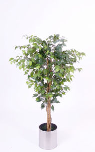 Artificial Plants of Ficus Tree with Natural Trunk