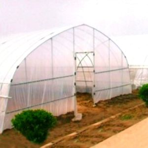 Hot Sale Tunnel Greenhouse with Factory Price pictures & photos