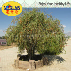 Medlar Lbp Nature Ningxia Organic Wolfberry pictures & photos