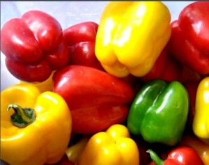 Hot Sale Red Bell Pepper pictures & photos