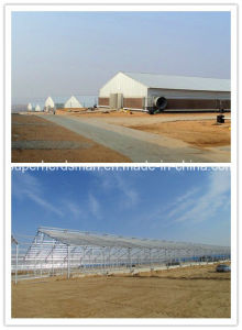 Prebab Steel Structure Poultry Farm Construction pictures & photos