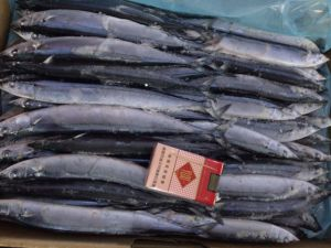 Frozen Mackerel Saury for Canning pictures & photos