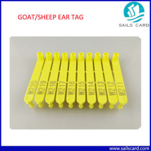Excellent Quality Ear Tag for Cattle/Sheep/Goat pictures & photos