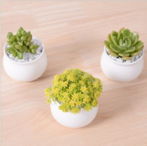 Creative Desktop Decoration Mini White Round Ceramic Flower Pot pictures & photos
