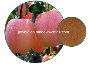 Hot Selling Weight Loss Natural Apple Extract, Phlorizin 40%~98% pictures & photos