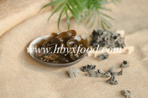 Within 2.5cm Dried Black Fungus From Chinese Supplier pictures & photos