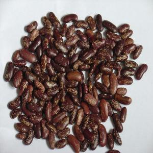 Dark Red Speckled Kidney Bean 180-200