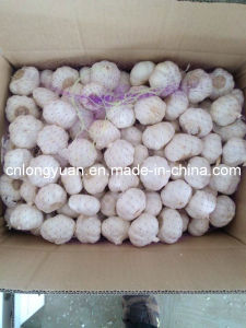 Chinese New Crop Garlic with Carton Packing pictures & photos