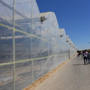 China Wholesale Commercial Eco-Friendly Greenhouse pictures & photos