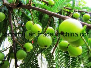 Pure-Natural Amla Powder /Amla Fruit Powder /Amla Juice Powder pictures & photos