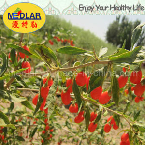 Medlar Lbp Dried Ningxia Red Organic Wolf Berry