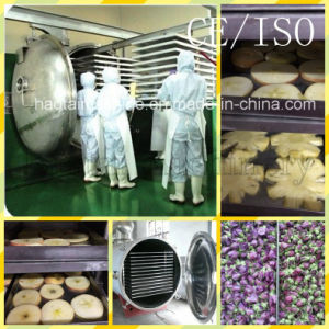 Food Freeze Dryer Price / Commercial Fruits and Vegetables Dryer pictures & photos