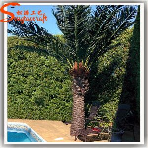 Distinctive Design Garden Ornamental Artificial Date Palm Tree pictures & photos