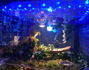 Customized Design Acrylic Box LED Display Reptile Box pictures & photos