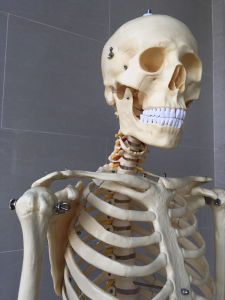 Lab Supplies Medical Teaching Human Skeleton Model (R020102) pictures & photos